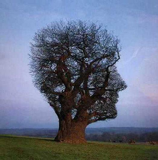 Citaten Over Bomen : Zelfkennis